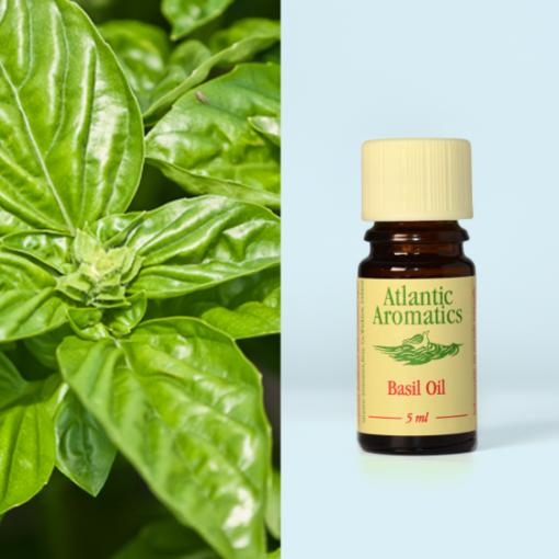 Atlantic Aromatics Basil Oil