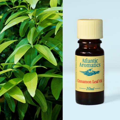 Atlantic Aromatics Cinnamon Leaf Oil