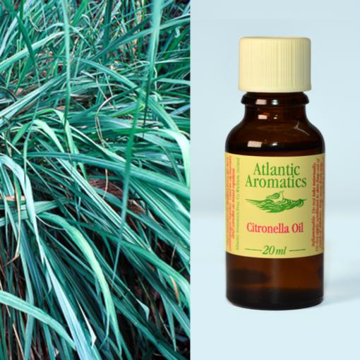 Atlantic Aromatics Citronella Oil
