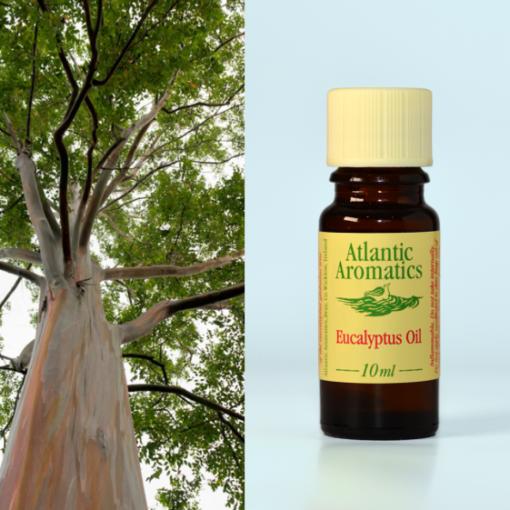 Atlantic Aromatics Eucalyptus Oil