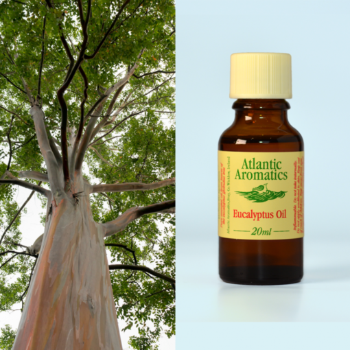 Atlantic Aromatics Eucalyptus 20ml