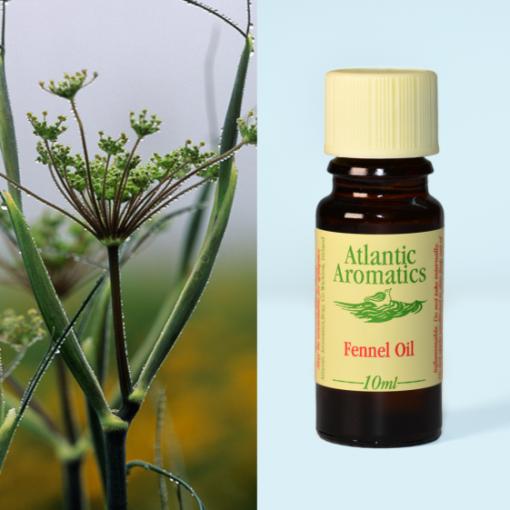 Atlantic Aromatics Fennel Oil