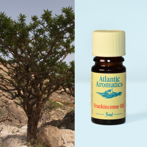 Atlantic Aromatics Frankincence Oil