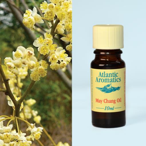 Atlantic Aromatics May Chang Oil