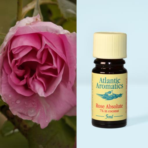 Atlantic Aromatics Rose Absolute