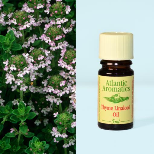Atlantic Aromatics Thyme Linalool Oil