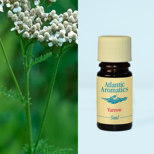 Atlantic Aromatics Yarrow Oil